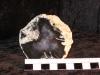 242-z-prokremenele-drevo-jalovce-juniperusankaraturecko