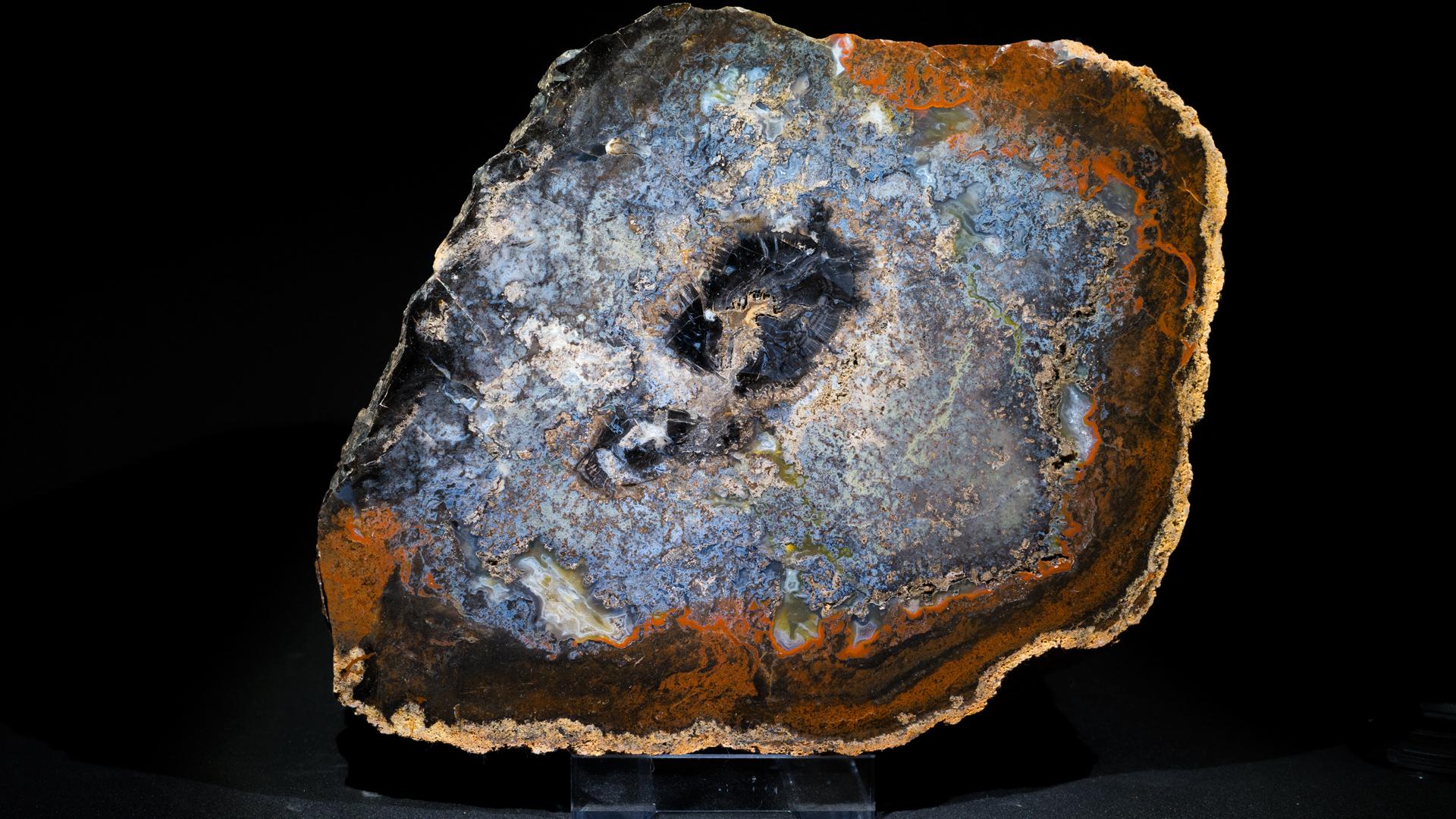 Sigilaria 26x19, Holenice, Spodní perm
